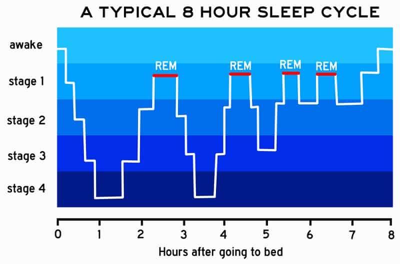 Stage of Sleep – REM (rapid eye movement)