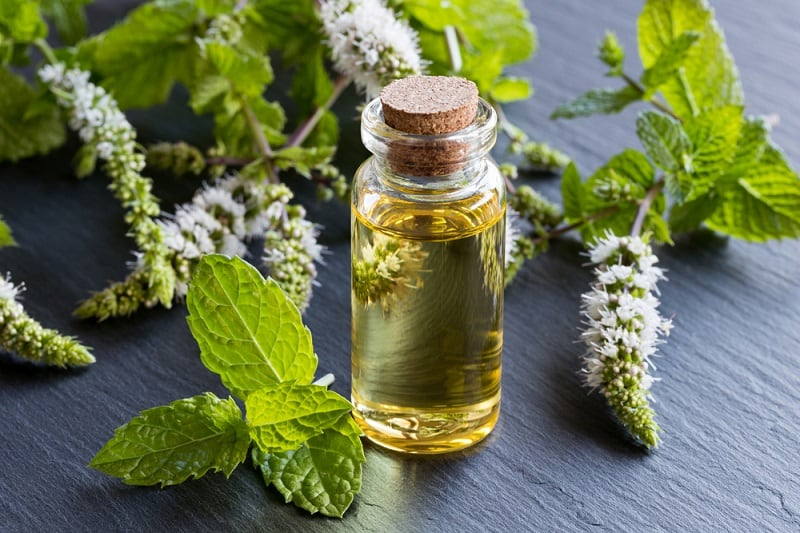 Best Essential Oils For Sciatica peppermint